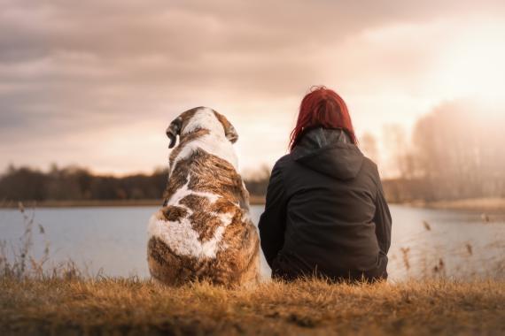 startup Hardvard envejecimiento perros