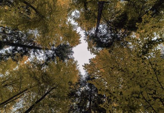 Cortafuegos en el bosque