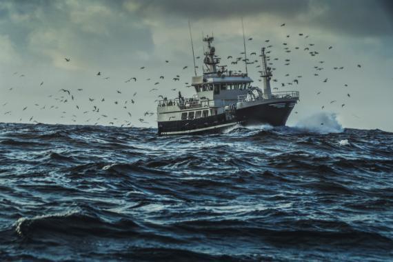 """El pescado es el nuevo """"petróleo"""": un arma de negociación geopolítica."""