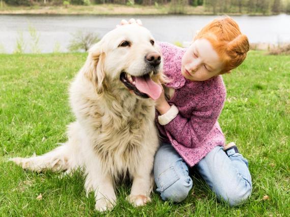 Los Golden Retrievers son una raza amigable para los niños.