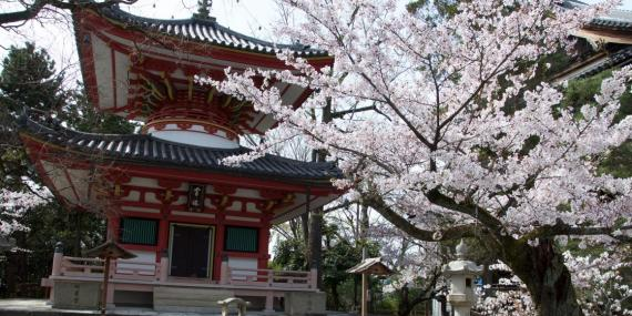 The Mieido Shrine, Kyoto, Japan, April 2016. Japan is the 10th-safest country.