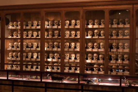 Museo de la medicina de Mutter. Calavera, terror