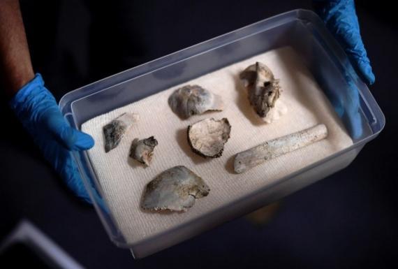 Recuperan trozos de la calavera más antigua de América, en el museo incendiado de Brasil