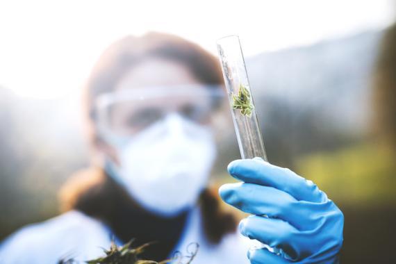 Científica con cannabis