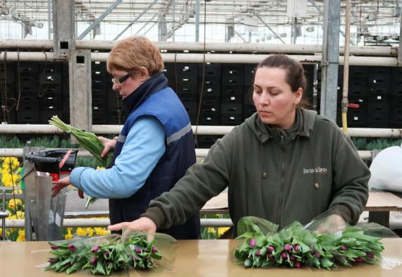 Mujeres trabajando en un invernadero.
