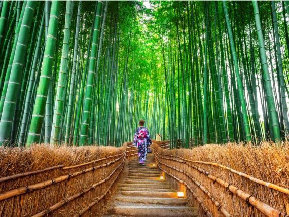 Bosque de bambú de Sagano, Kioto, Japón.