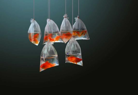 Peces en plástico en el océano