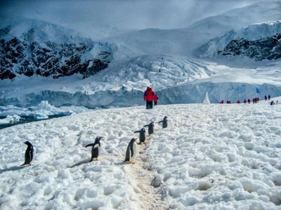 La Antártida es el desierto más grande del mundo.