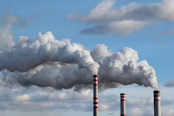 """Los bosques del planeta son auténticas """"aspiradoras"""" de carbono, uno de los gases de efecto invernadero"""