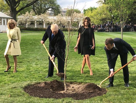 Donald Trump, presidente de los Estados Unidos, y Emmanuel Macron, presidente de Francia, plantan un árbol frente a la Casa Blanca.