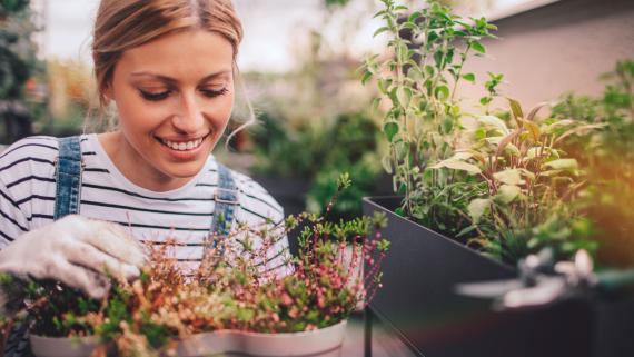 Huerta: utensilios, consejos aprende a tener tu huerto en casa