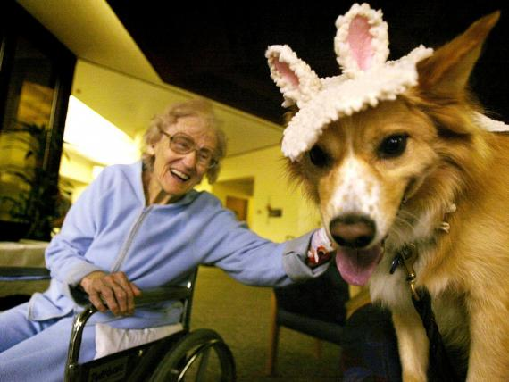 Kirby is just one of many pups involved in the Pet Assistance Therapy program at Torrance Memorial Medical Center.