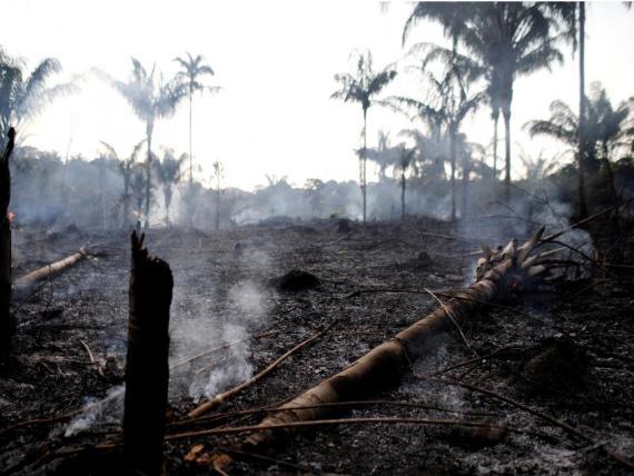 La selva amazónica está ardiendo a un ritmo récord: El Amazonas brasileño ha sufrido más de 74.000 incendios este año, frente a los 40.000 del año pasado.