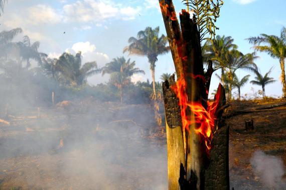 Ha habido más de 74.000 incendios en la Amazonia brasileña en lo que va de año.