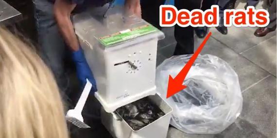 Eric Adams, el presidente del municipio de Brooklyn muestra la trampa para ratas Ekomille en una conferencia de prensa el pasado 6 de septiembre de 2019.
