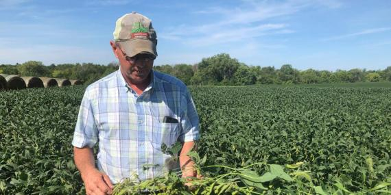 Farmer Randy Miller is shown with his soybeans.
