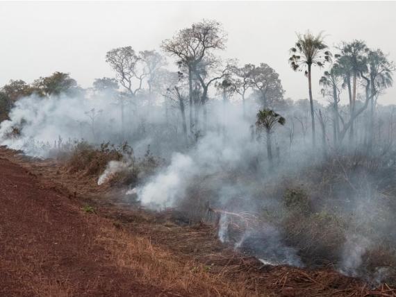 Nuevos incendios en el Amazonas
