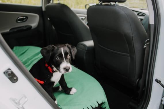 Mascotas en el coche