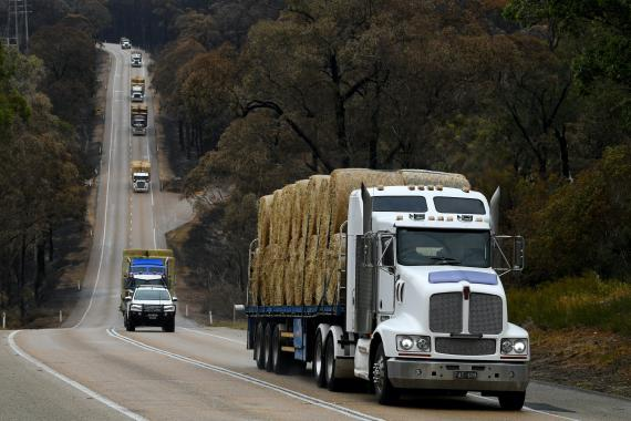 Un convoy de camiones transportan heno en Australia.