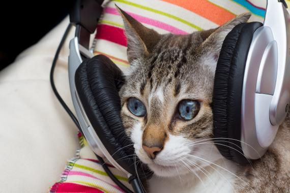 Gato con auriculares