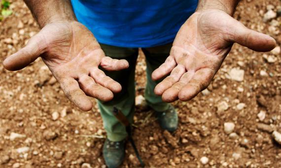 Un agricultor valenciano enseña sus manos después de trabajar