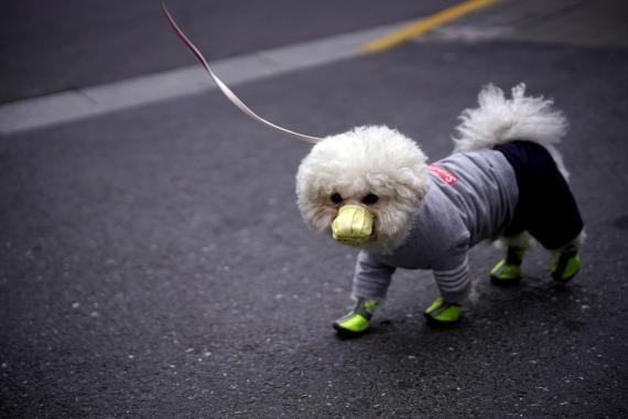 Un perro con mascarilla en una calle en Shanghai, China, el 2 de marzo de 2020.
