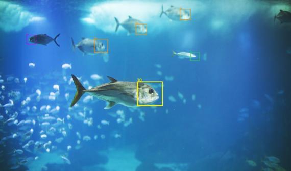 Sistema de reconocimiento de peces.