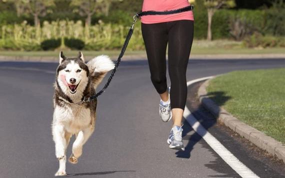 Los 3 mejores collares para perros para salir a correr y hacer canicross