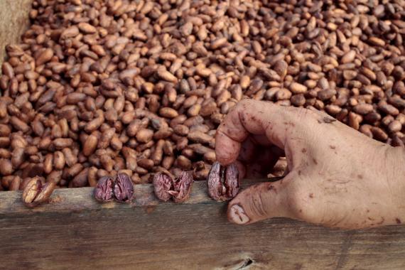 Granos de café en una cooperativa de Nicaragua