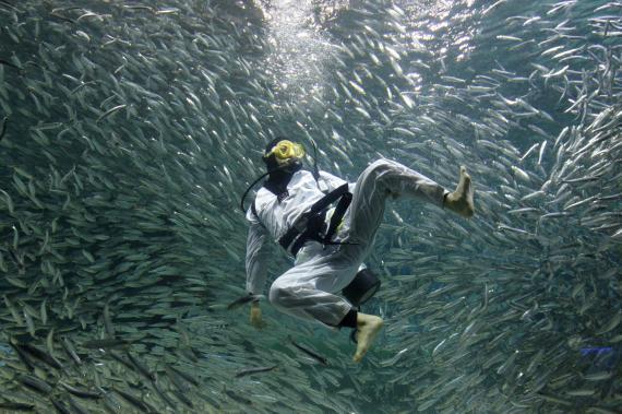 Un buceador rodeado de sardinas practica Taekwondo durante un espectáculo de buceo en Seúl
