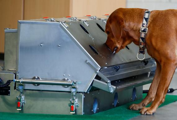 El ejército alemán entrena perros para detectar COVID-19