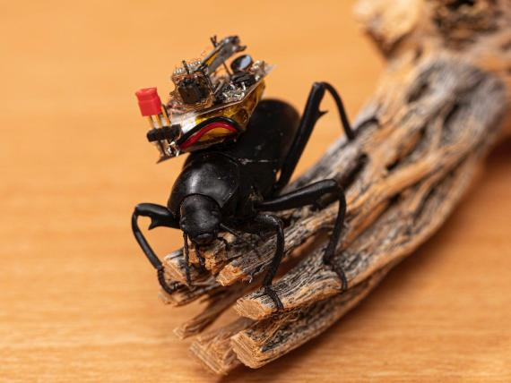 Scientists successfully put tiny GoPro-style wireless cameras on beetles, and it's paving the way for miniature robots