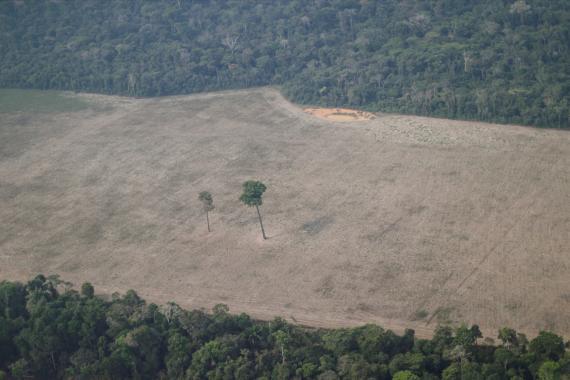 Una vista aérea muestra la deforestación de un bosque en el Amazonas