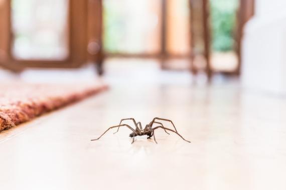 Araña en casa.