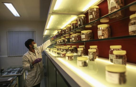 Un científico busca entre muestras de hierbas medicinales en Bombay.