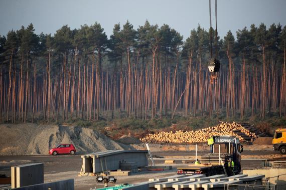 Tala de árboles en el terreno donde Tesla construirá su gigafactoría, cerca de Berlín (Alemania)