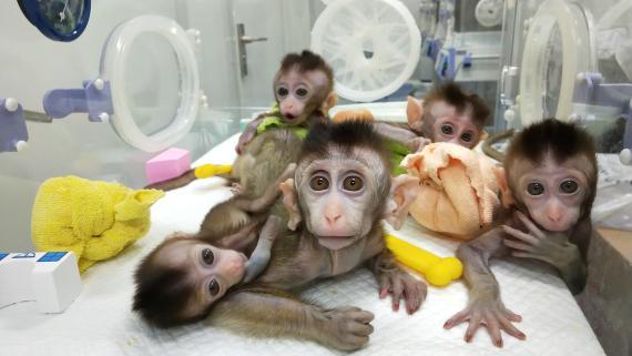 Monos ritmo circadiano