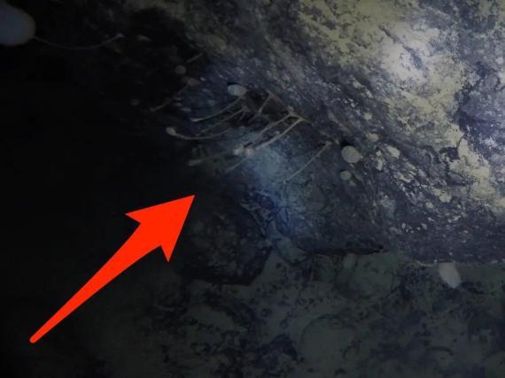 Imagen del vídeo en el que los científicos observaron animales inmóviles, bajo el hielo de la Antártida; las criaturas parecen similares a las esponjas.