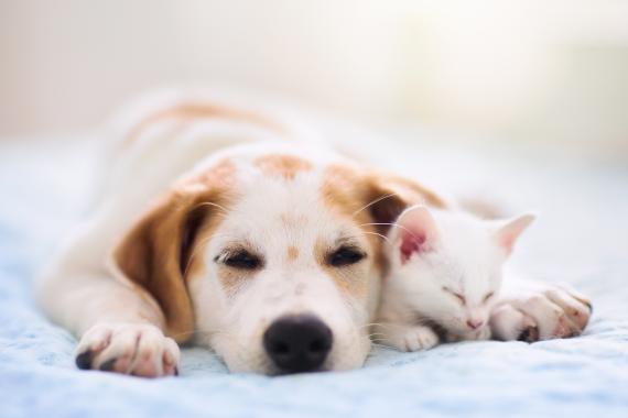 Gato con perro