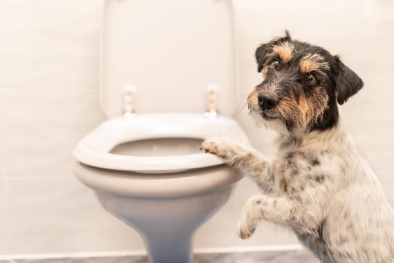 Perro en el baño.