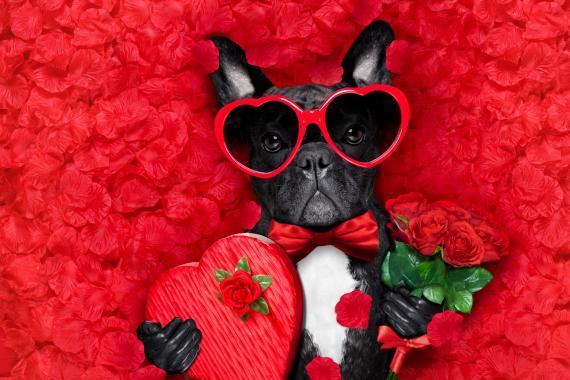Perro de San Valentín.