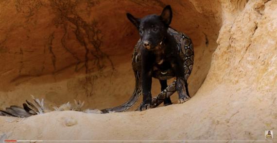 Una investigación de la organización para el bienestar animal Lady Freethinker y Business Insider revela que YouTube ha estado mostrando anuncios de grandes marcas comerciales en vídeos que muestran escenas de crueldad con animales.