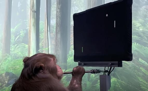 Un mono juega a un videojuego con la mente, según Neuralink