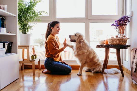 Perro mascota adoptar