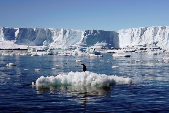 pingüino deshielo glaciares