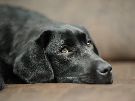 Algunos hábitos comunes pueden causarle estrés a tu perro.
