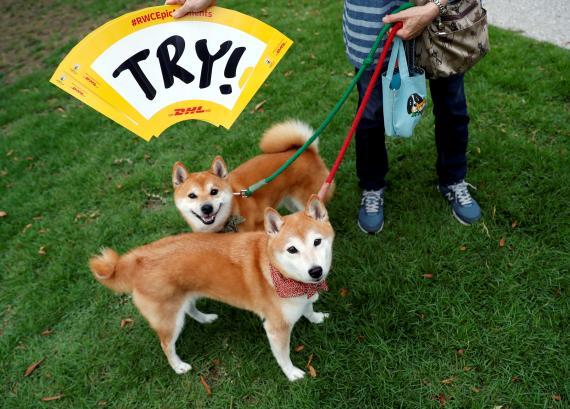 Dos perros Shiba Inu, la raza en la que se inspiró la criptomoneda Dogecoin (Reuters)