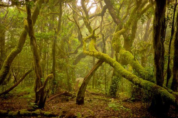 Parque de Canarias