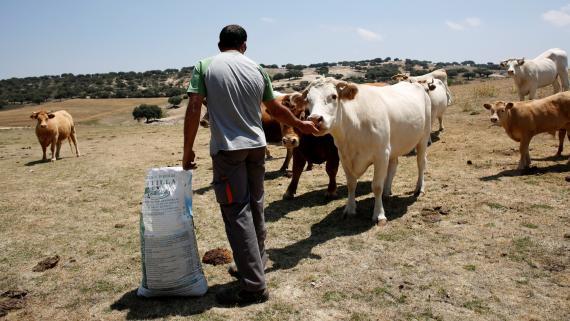 Los precios de los alimentos básicos se disparan en la última década.