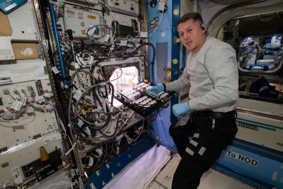 Los astronautas de la NASA han comenzado a cultivar chiles para mejorar la dieta de la tripulación en futuras misiones